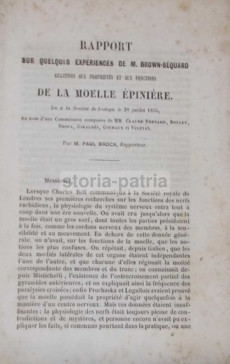 Medicina, Neurologia, Midollo Spinale, Esperienze Di Brown Sequard, Cavie, Broca, 800 anteprima